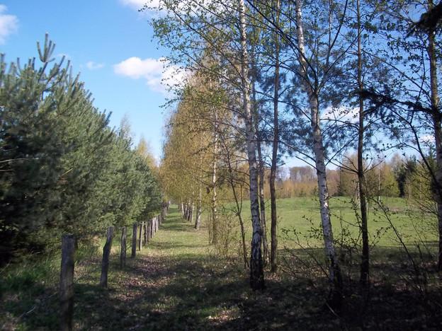 Działka na sprzedaż, Wólka Majdańska, 6014 m²   Morizon.pl   6885