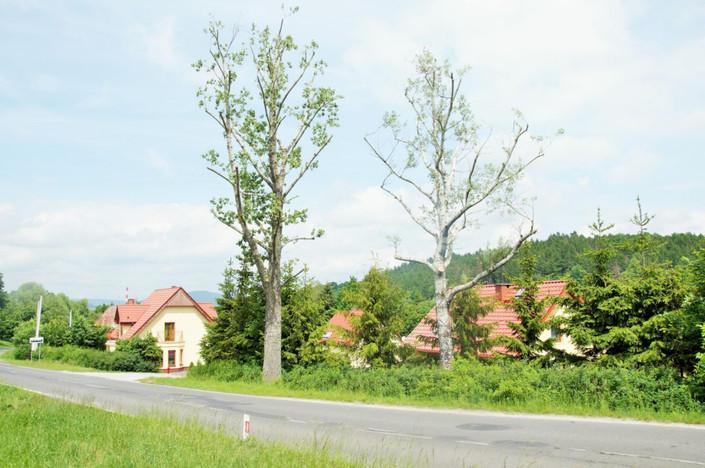 Działka na sprzedaż, Kamienna Góra Lubawska, 1265 m² | Morizon.pl | 0314