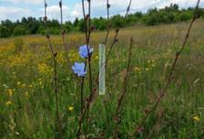 Działka na sprzedaż, Bobrowiec, 11600 m²