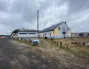 Fabryka, zakład do wynajęcia, Żołędowo, 550 m²
