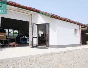 Lokal usługowy do wynajęcia, Jasionka, 290 m²