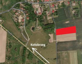 Działka na sprzedaż, Stramnica, 12491 m²