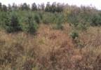 Działka na sprzedaż, Kuczbork-Osada, 46400 m²   Morizon.pl   1350 nr4