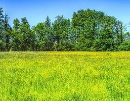 Morizon WP ogłoszenia   Działka na sprzedaż, Radonie, 5000 m²   0581