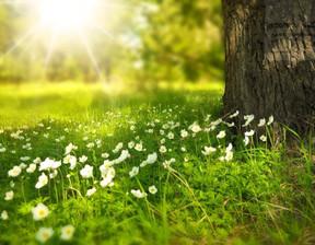 Działka na sprzedaż, Młochów, 1480 m²