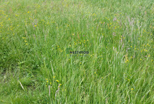 Działka na sprzedaż, Falenty Duże, 105000 m²