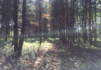 Działka na sprzedaż, Bieniewiec, 15000 m² | Morizon.pl | 7589 nr7