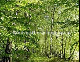 Morizon WP ogłoszenia | Działka na sprzedaż, Janinów, 7900 m² | 4516
