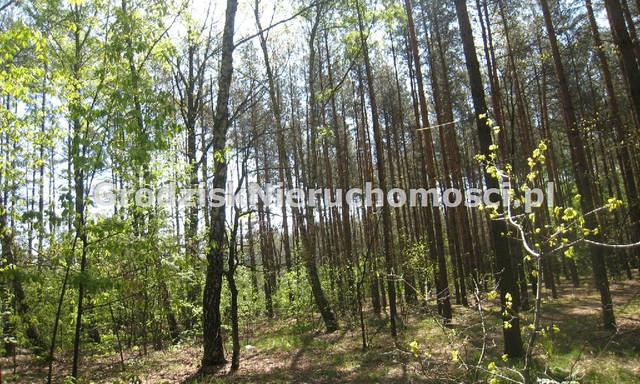 Leśne na sprzedaż <span>Grodziski, Żabia Wola, Siestrzeń</span>