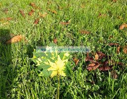 Morizon WP ogłoszenia | Działka na sprzedaż, Łazy, 1200 m² | 2773