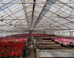 Morizon WP ogłoszenia | Handlowo-usługowy na sprzedaż, Lesznowola Al.KRAKOWSKA., 6226 m² | 2363