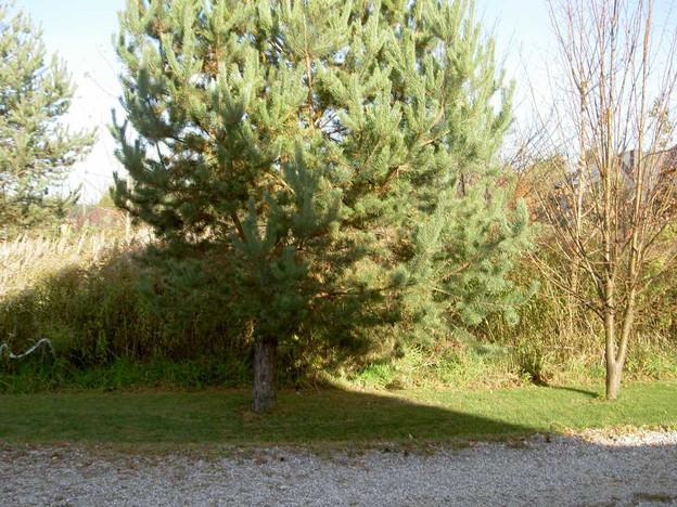 Morizon WP ogłoszenia | Działka na sprzedaż, Konstancin-Jeziorna Wierzbnowska, 1248 m² | 8827