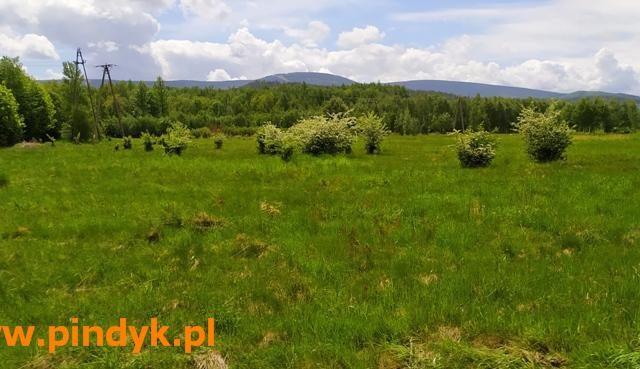 Rolny na sprzedaż <span>Lwówecki, Mirsk, Orłowice</span>