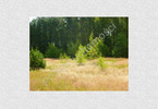 Morizon WP ogłoszenia | Działka na sprzedaż, Siestrzeń, 4100 m² | 0038
