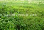 Morizon WP ogłoszenia | Działka na sprzedaż, Lublin Szerokie, 3917 m² | 7014