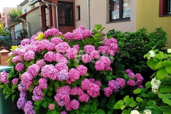 Dom na sprzedaż <span>Głogowski, Głogów, Paulinów, Wileńska</span>