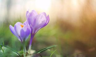 Wiosenne porządki w ogrodzie – kompletny poradnik