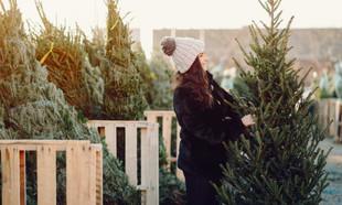 Świąteczna choinka – jakie drzewko do domu i mieszkania?